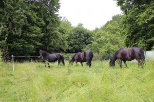 Ponys_7241