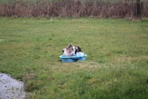 Das Planschbecken ist eindeutig sicherer als der Teich
